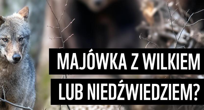 You are currently viewing Majówka z wilkiem lub niedźwiedziem?